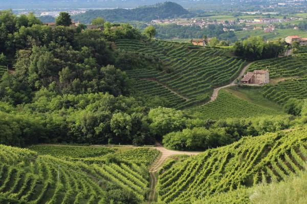 Le meravigliose colline del Prosecco